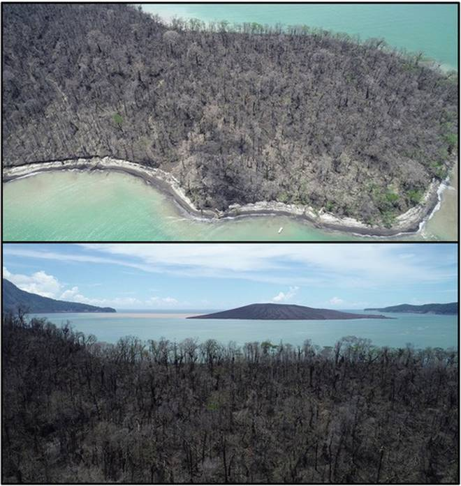This dead forest on Panjang Island, to the north east of the Anak Krakatau volcano, shows some of...