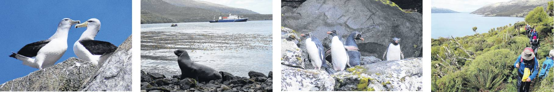 Breeding Salvin's albatrosses on the top of a Bounty Island (left); a beachmaster sea lion guards...
