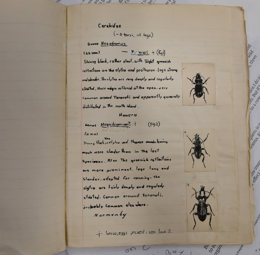 Aged 10,  Anthony Harris had already produced his second hand-written and hand illustrated book...