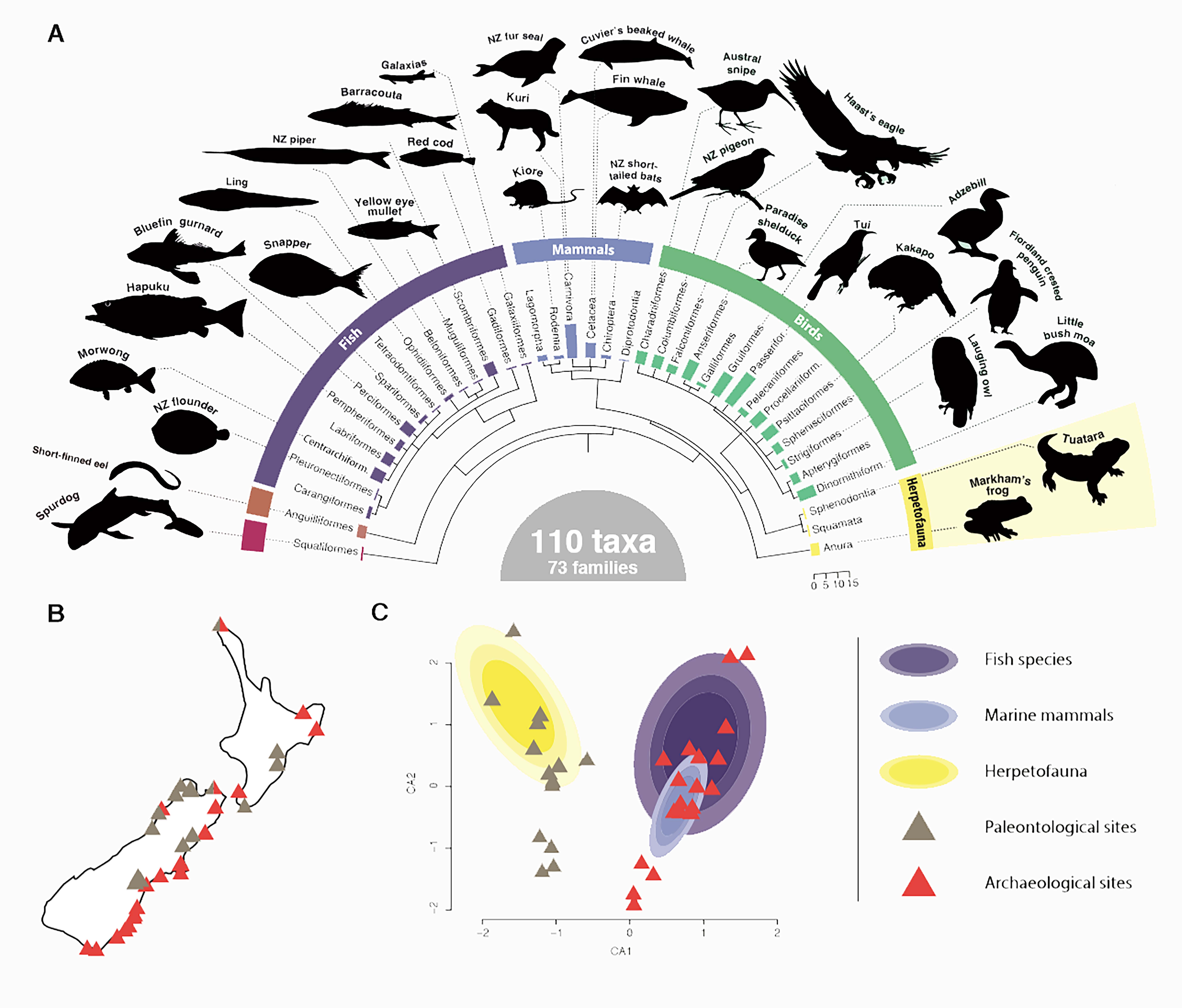 Overall biodiversity identified in the study. A) Diversity of animals identified B)...