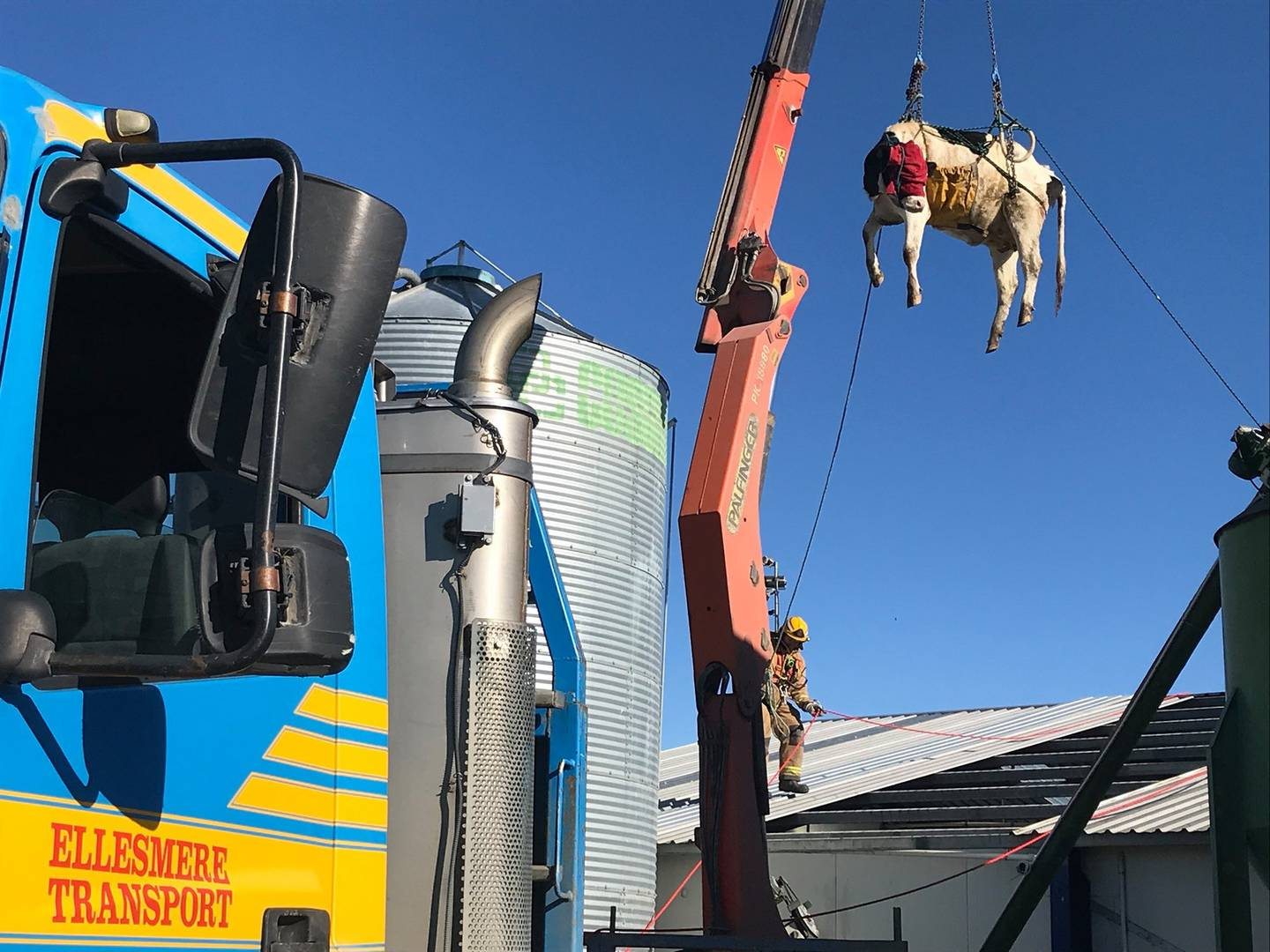 Fire crews were able to get the cow out safely. Photo: Supplied via NZ Herald