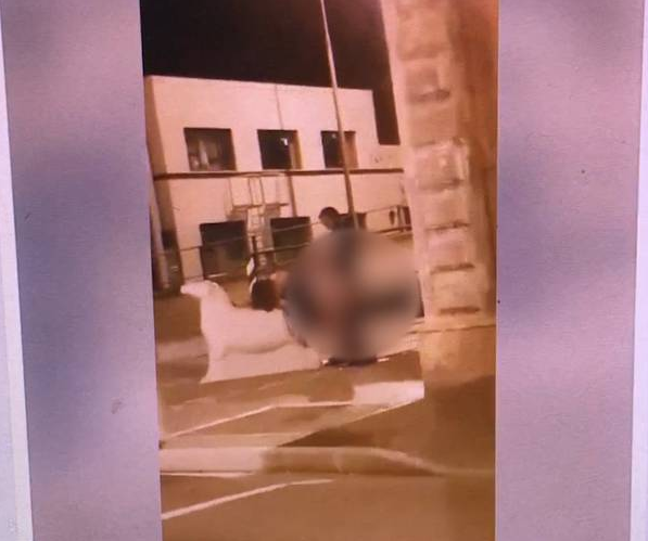 A couple has been filmed having sex beside State Highway 1 in Dunedin. Photo: via video