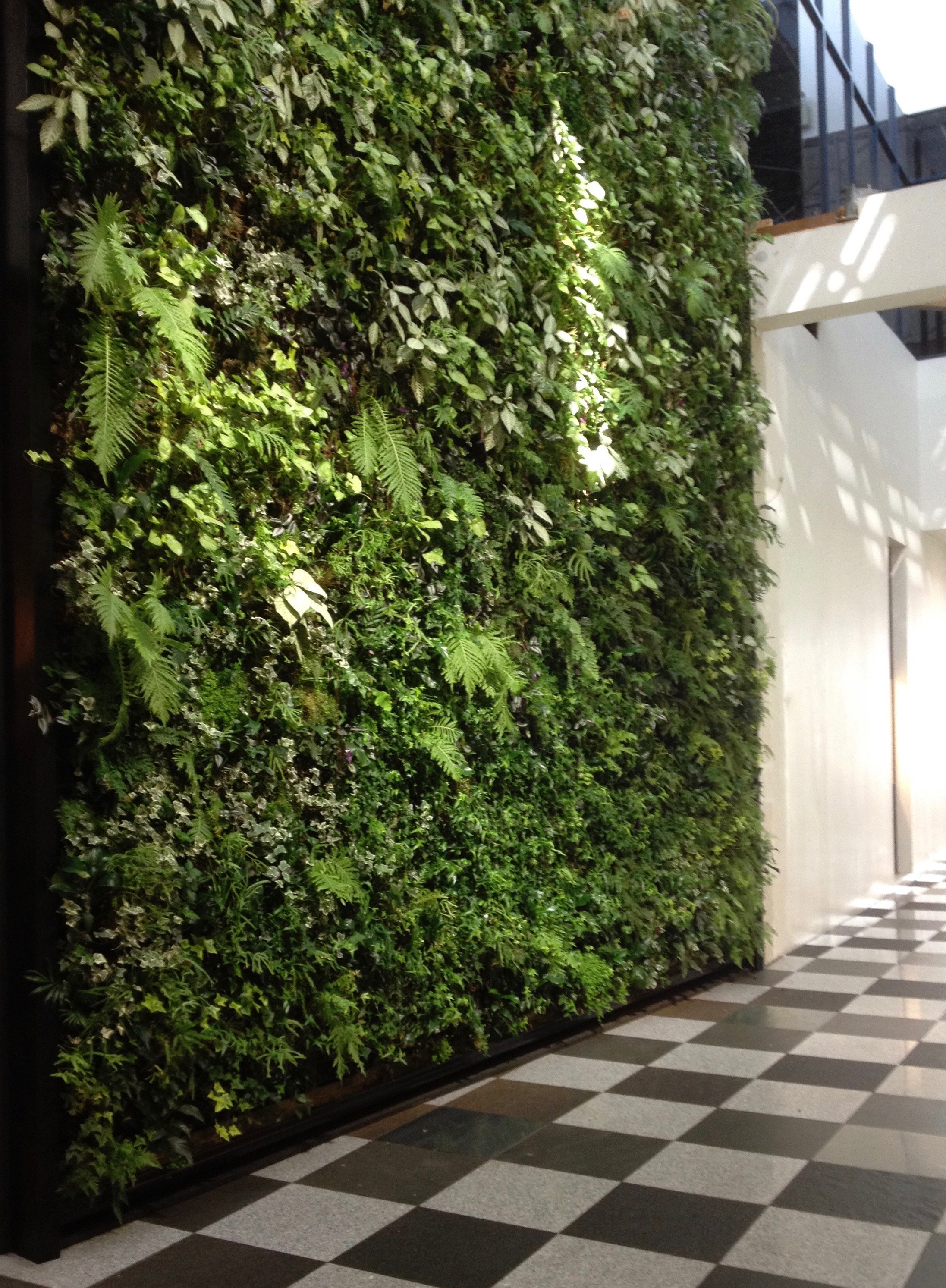 The living wall in Harvest Court, George St, Dunedin.