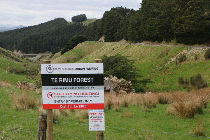 The four largest private landowners are foreign-owned forestry companies. Photo: RNZ