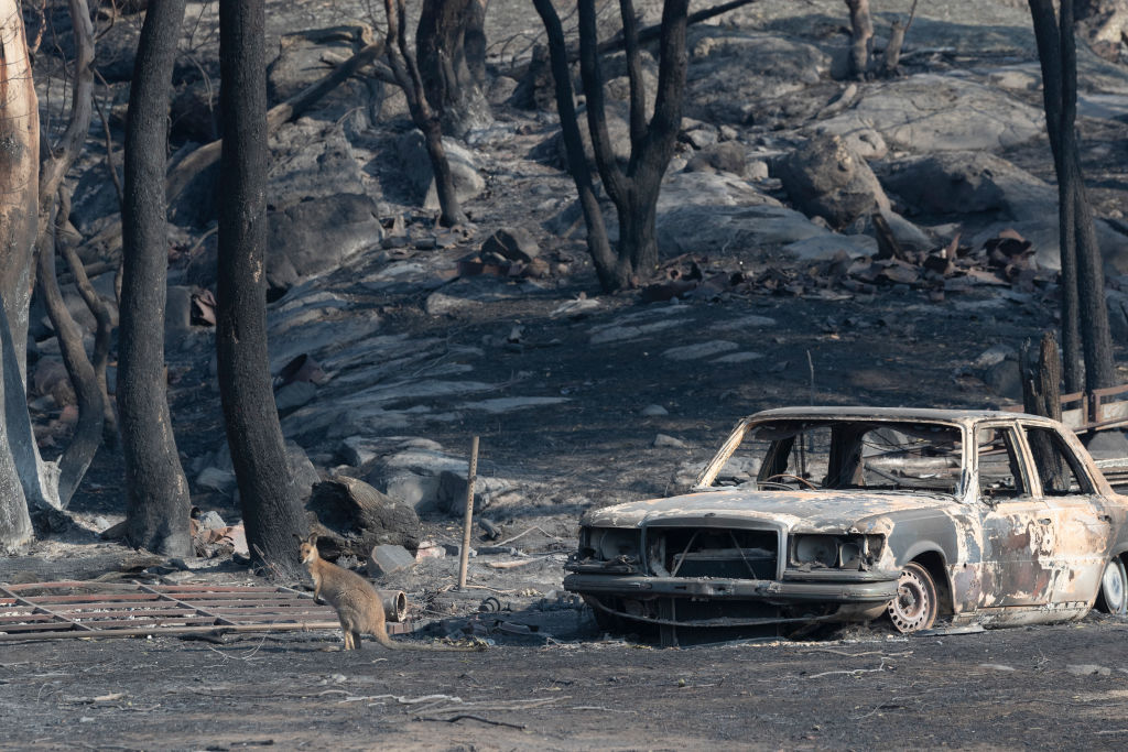 A kangaroo pauses by the burnt-out remains of a car after a bushfire swept through Torrington in...