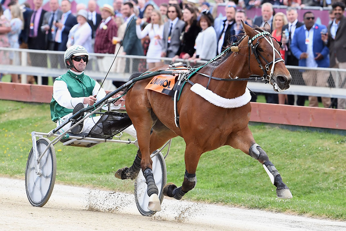 Bob Butt driving Heavyweight Hero to win the NZ Trotting Free-For-All on Cup Day at Addington...