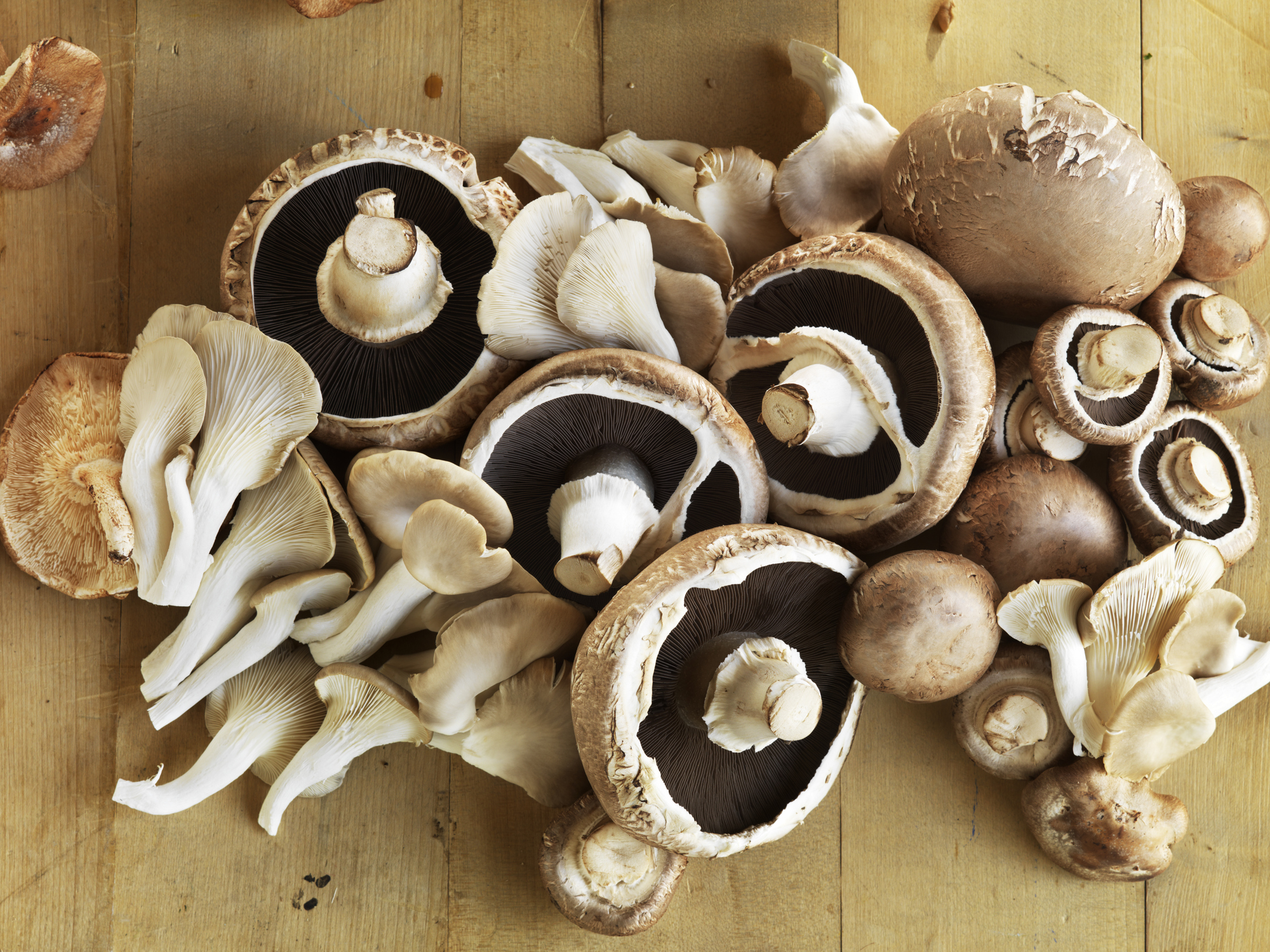 Mushrooms are a wonderful food source. Photo: Getty Images