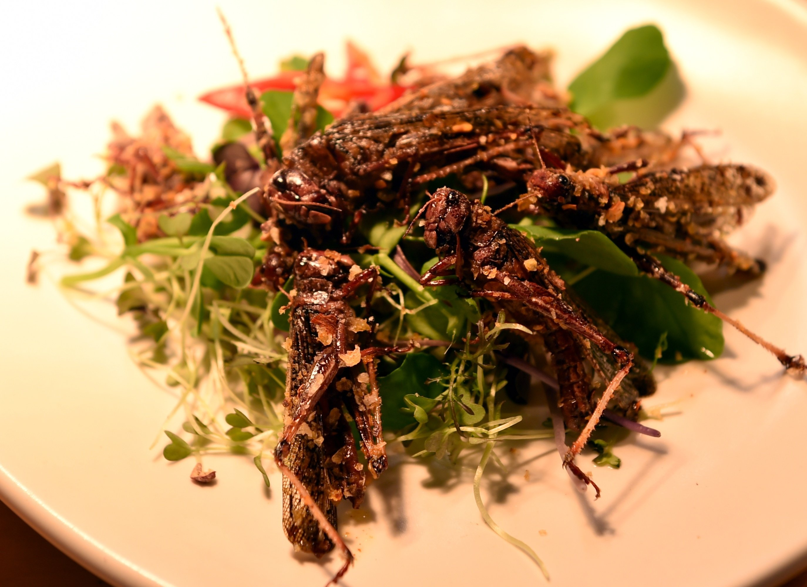 Image result for Locusts food