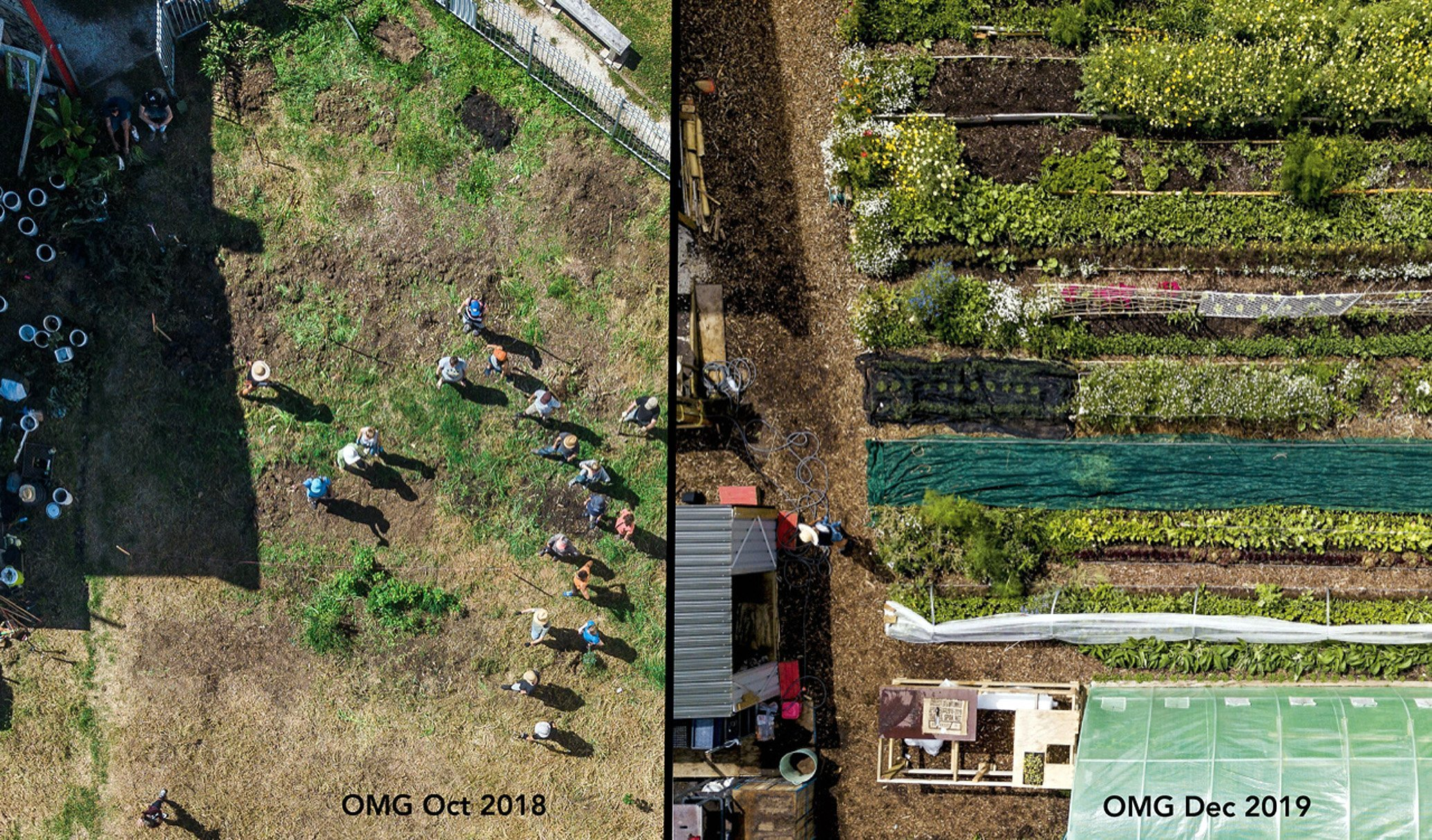 Organic market garden in Symonds St, Auckland. PHOTO: SUPPLIED