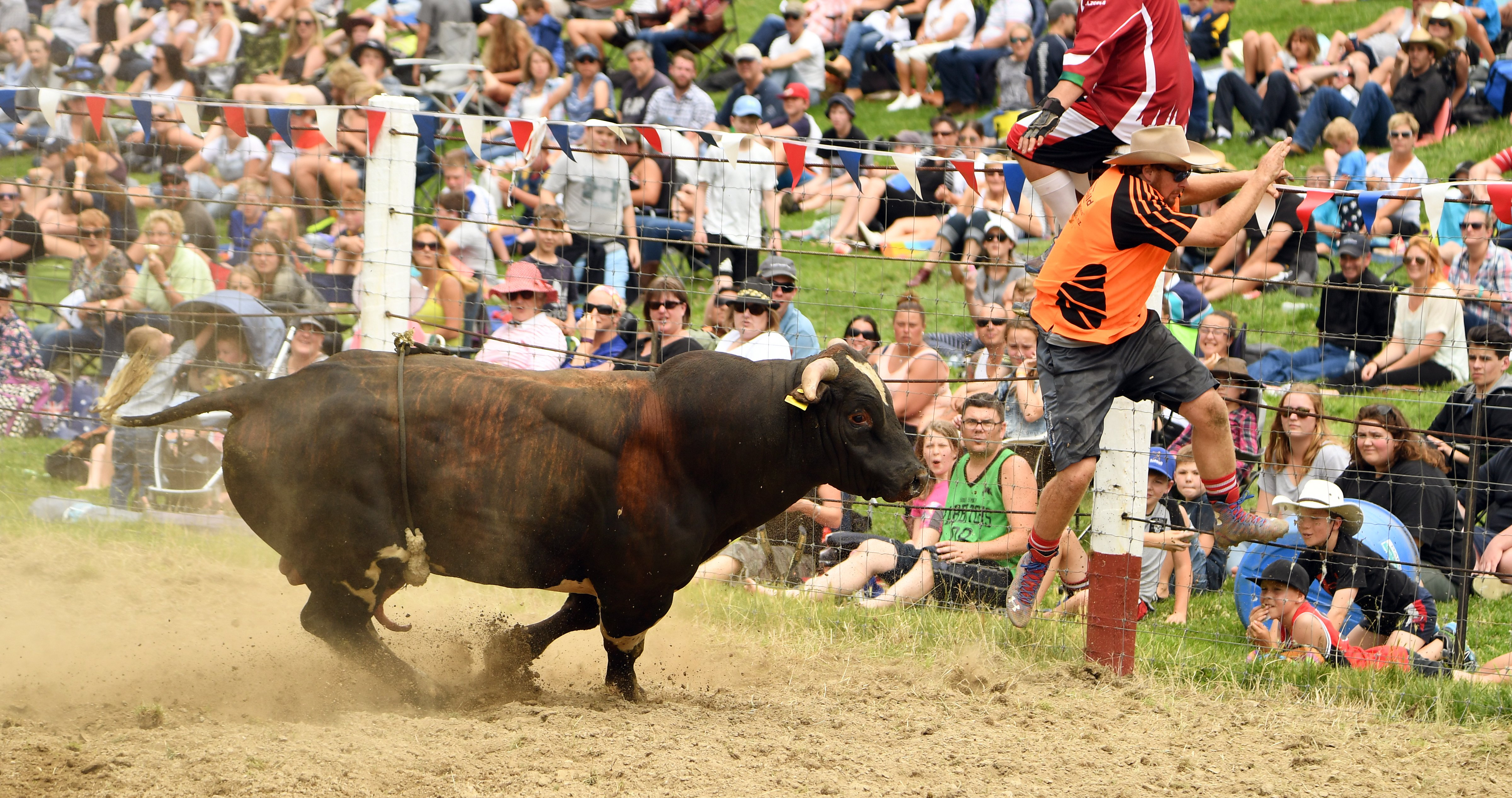 Tables turned? Cowboy Will Jamison runs away from a bull at the Outram rodeo in 2017. PHOTO:...