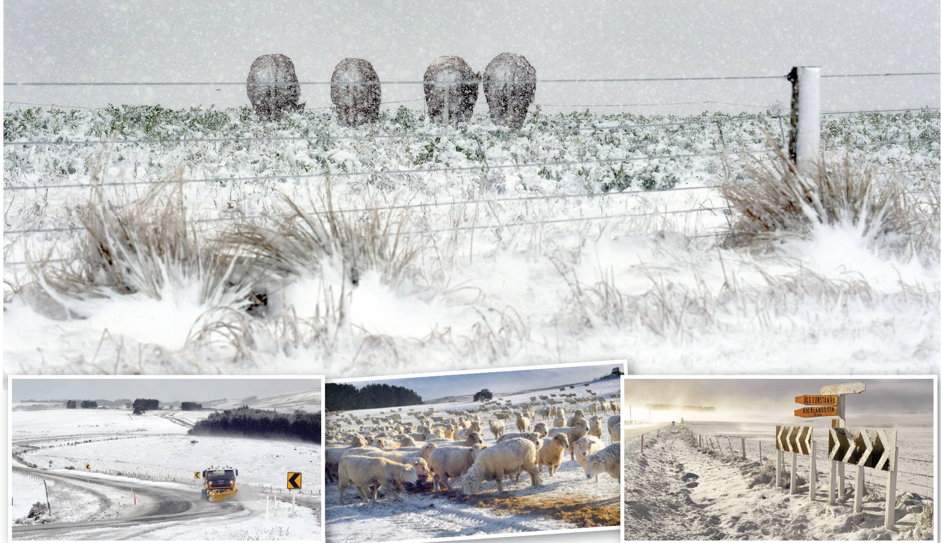 Clockwise from top: Cattle stand with their backs to the wind as snow blankets awinter crop beside Mt Gowrie Rd near Clarks Junction; State Highway 87 covered with snow near Clarks Junction; Andrew Richards feeds his flock of sheep at Strathview Station n