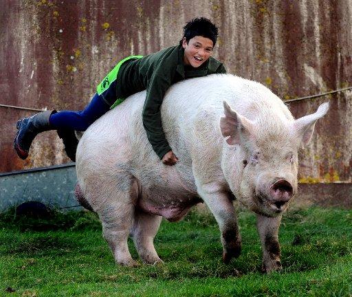 He's 'a Gentleman Of The Pig World'