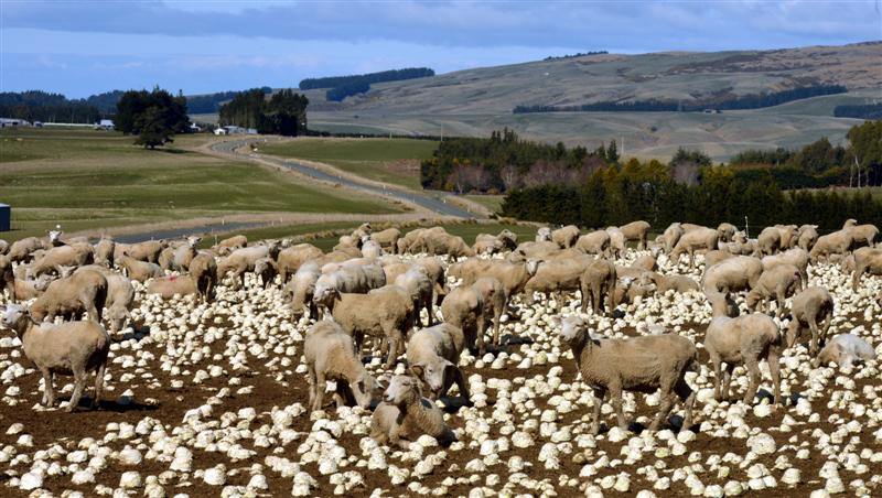 Beef And Lamb Expects Farm Profits To Rise Otago Daily Times Online News