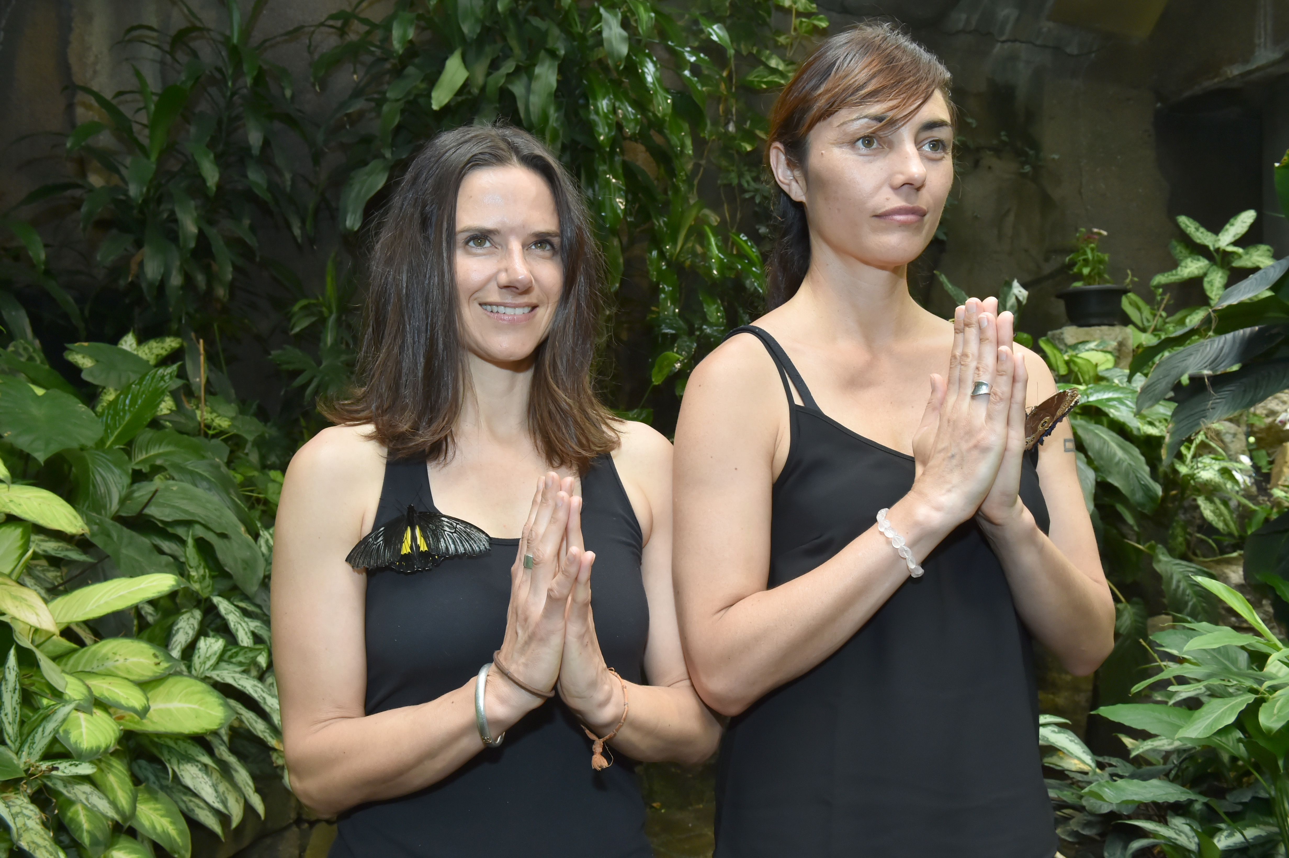 Butterfly House Yoga Class Fly Away Hit Otago Daily Times Online News Spray Lili Air