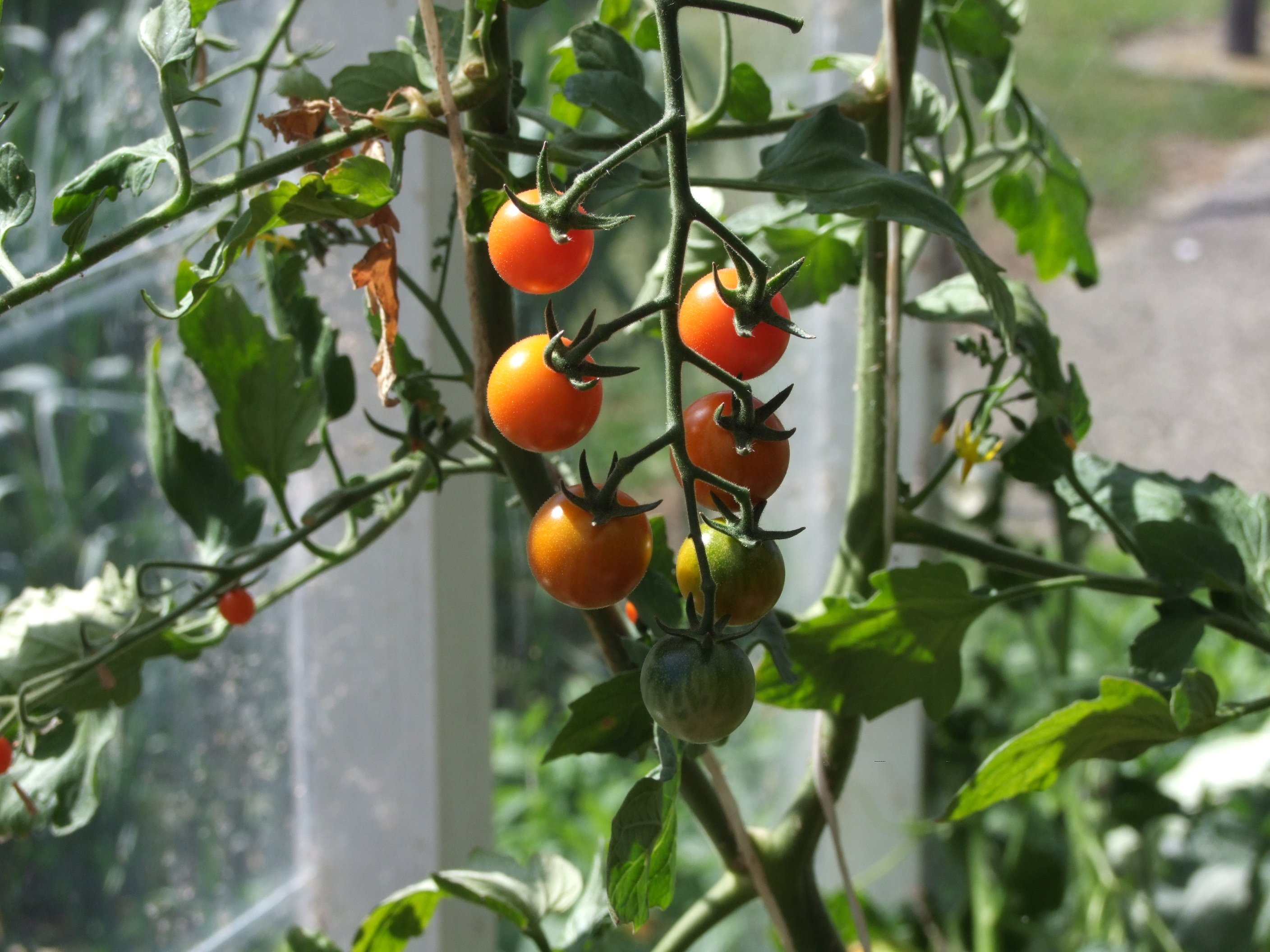 Planting in the greenhouse | Otago Daily Times Online News
