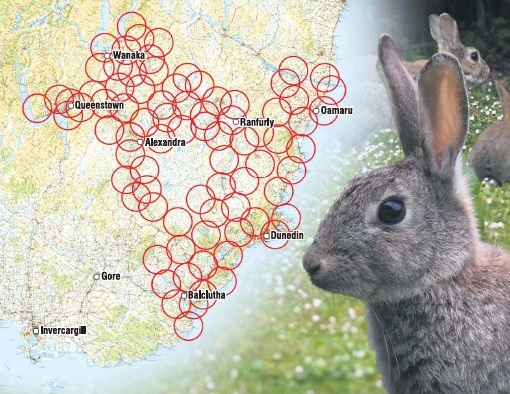 These overlapping circles indicate the expected distance the rabbit virus RHDV1 K5 will spread in...