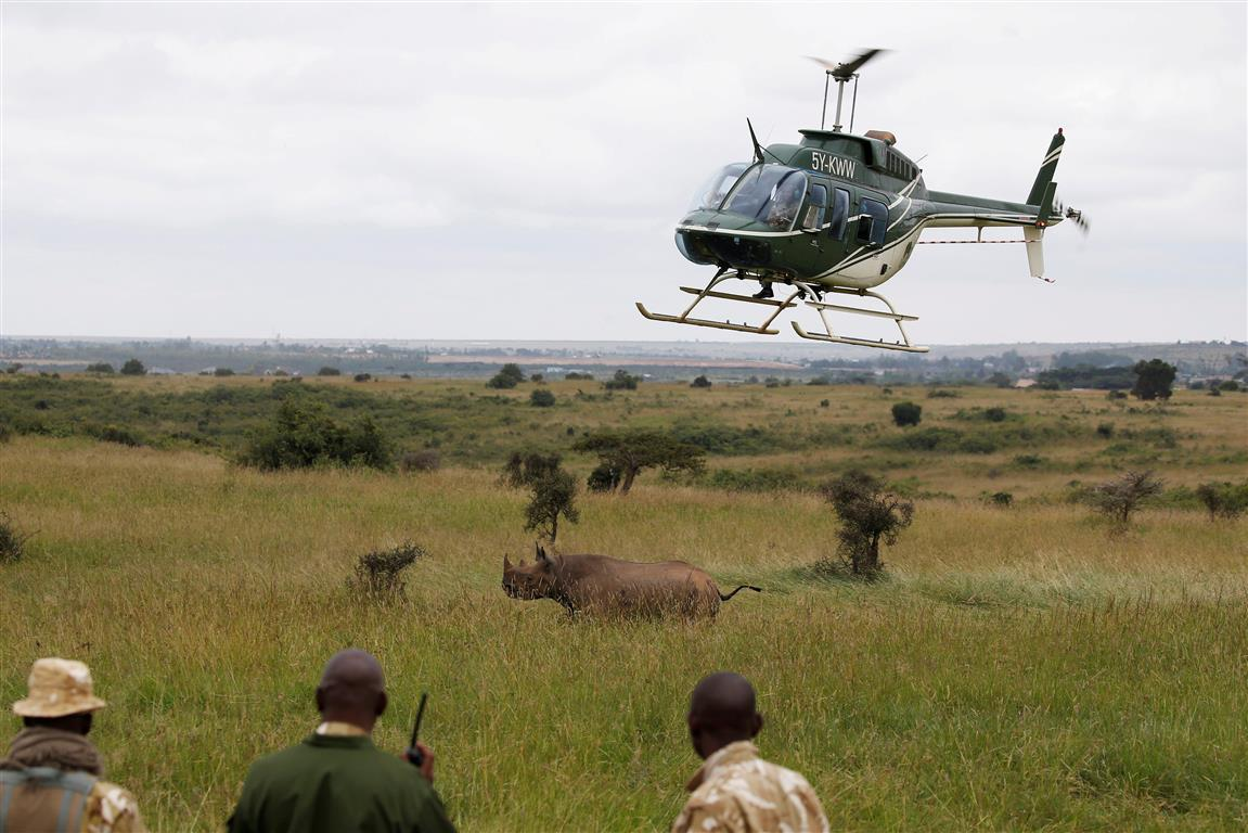 KWS officers get in trouble over deaths of 10 black rhinos