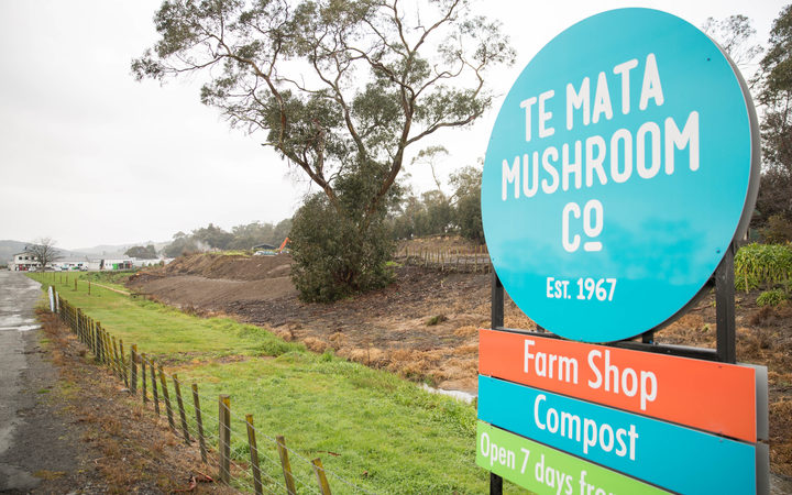 As part of Te Mata Mushrooms' resource consent, odours are not allowed to leave the boundaries of its Havelock North property. Photo: RNZ / Claire Eastham-Farrelly
