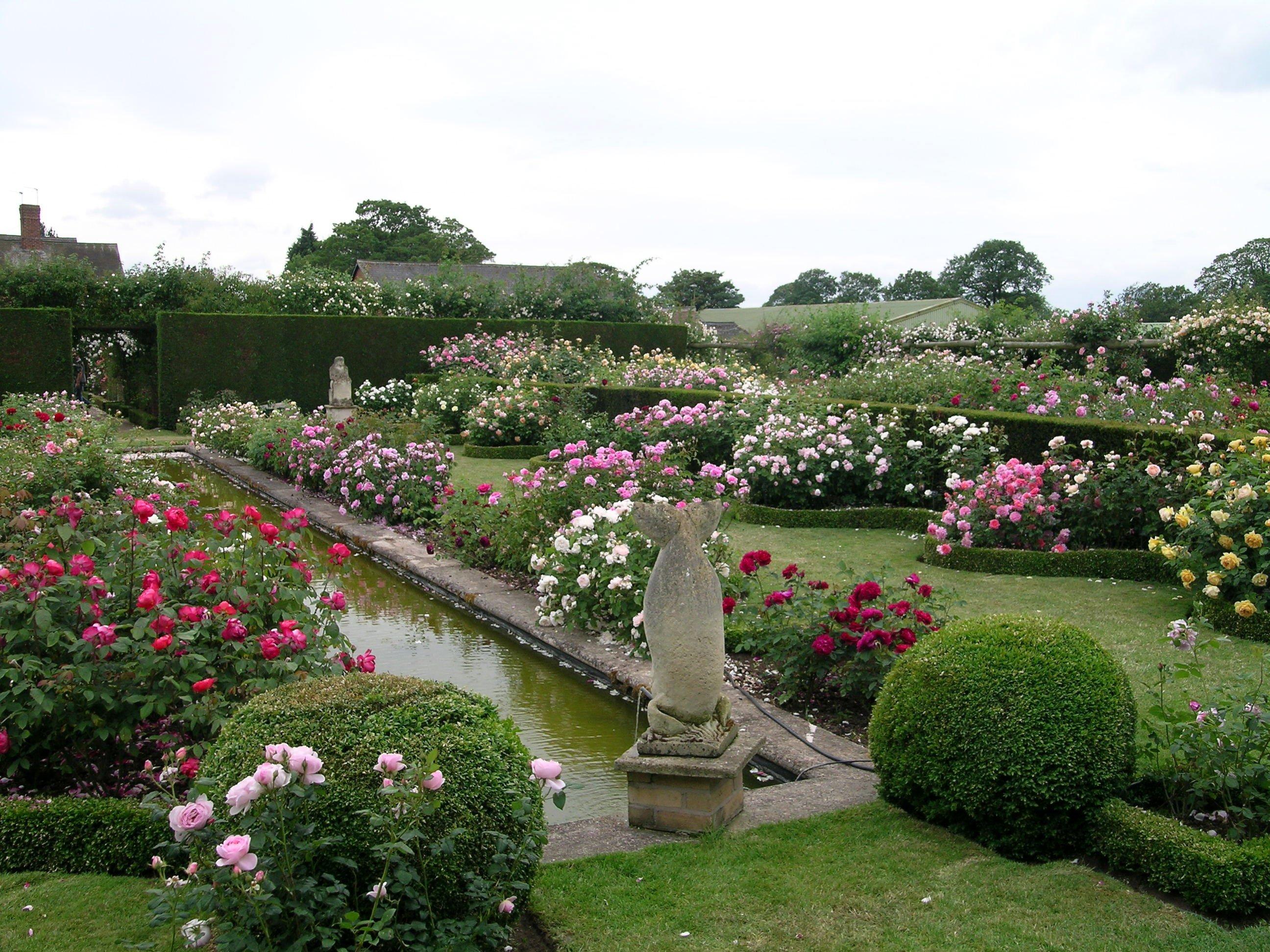 The garden at David Austin Roses, Albrighton, Shropshire, features hundreds of roses. Photos:...