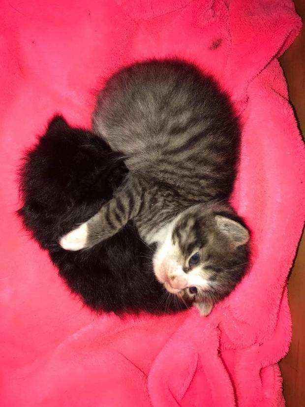 The rescued kitten with its new adopted mother. Photo: Supplied