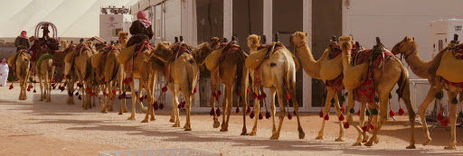 A caravan passes by at the King Abdulaziz Camel Festival. Photo: Deborah Heron