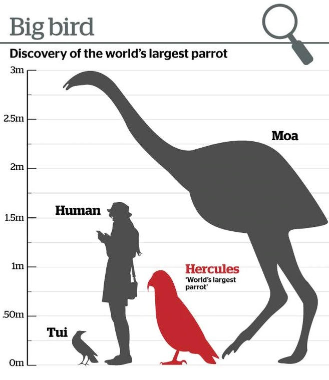 Remains of extinct giant parrot found in New Zealand