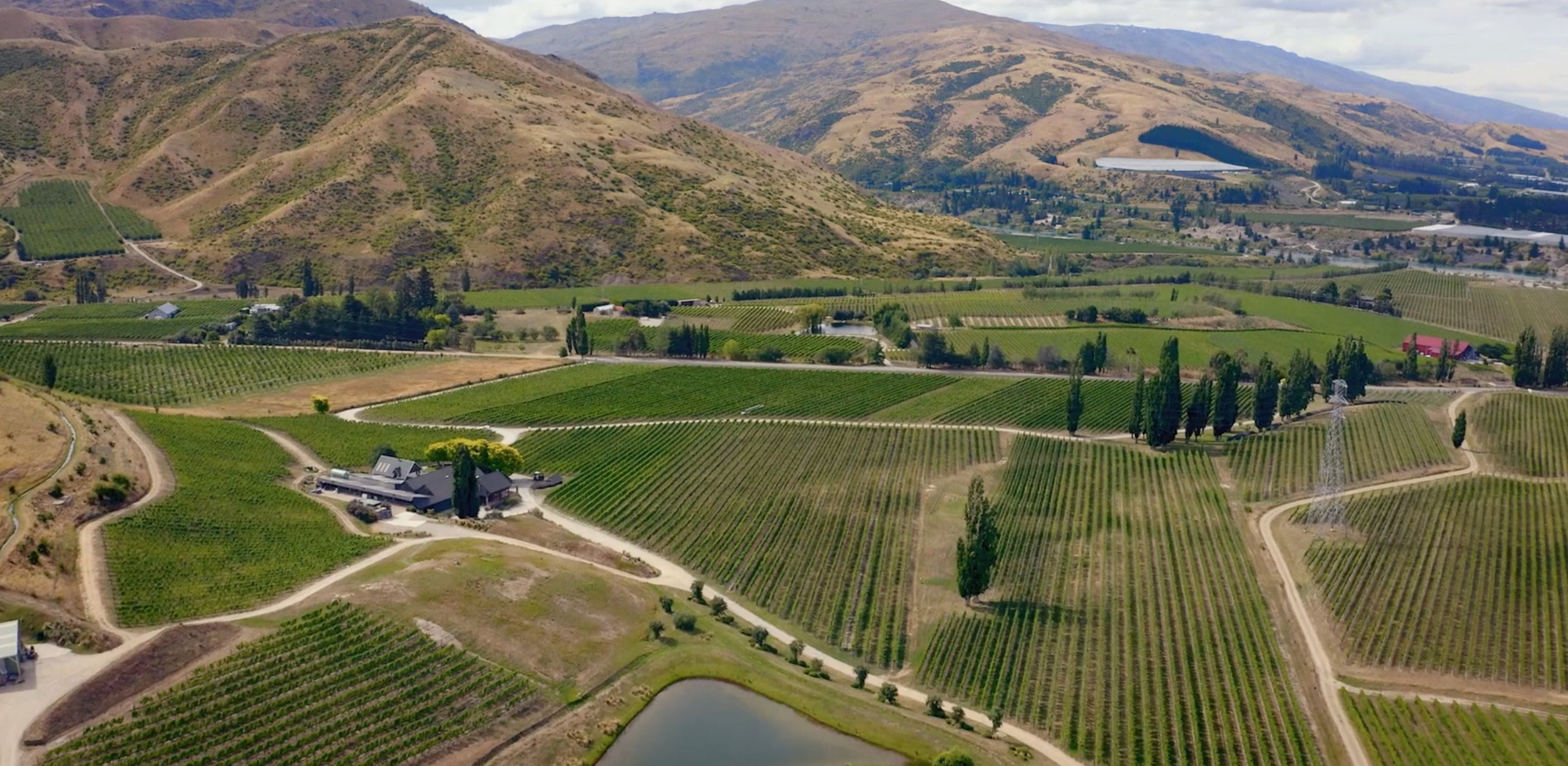 Central Otago's wine industry has grown hugely since Alan Brady first planted vines.
