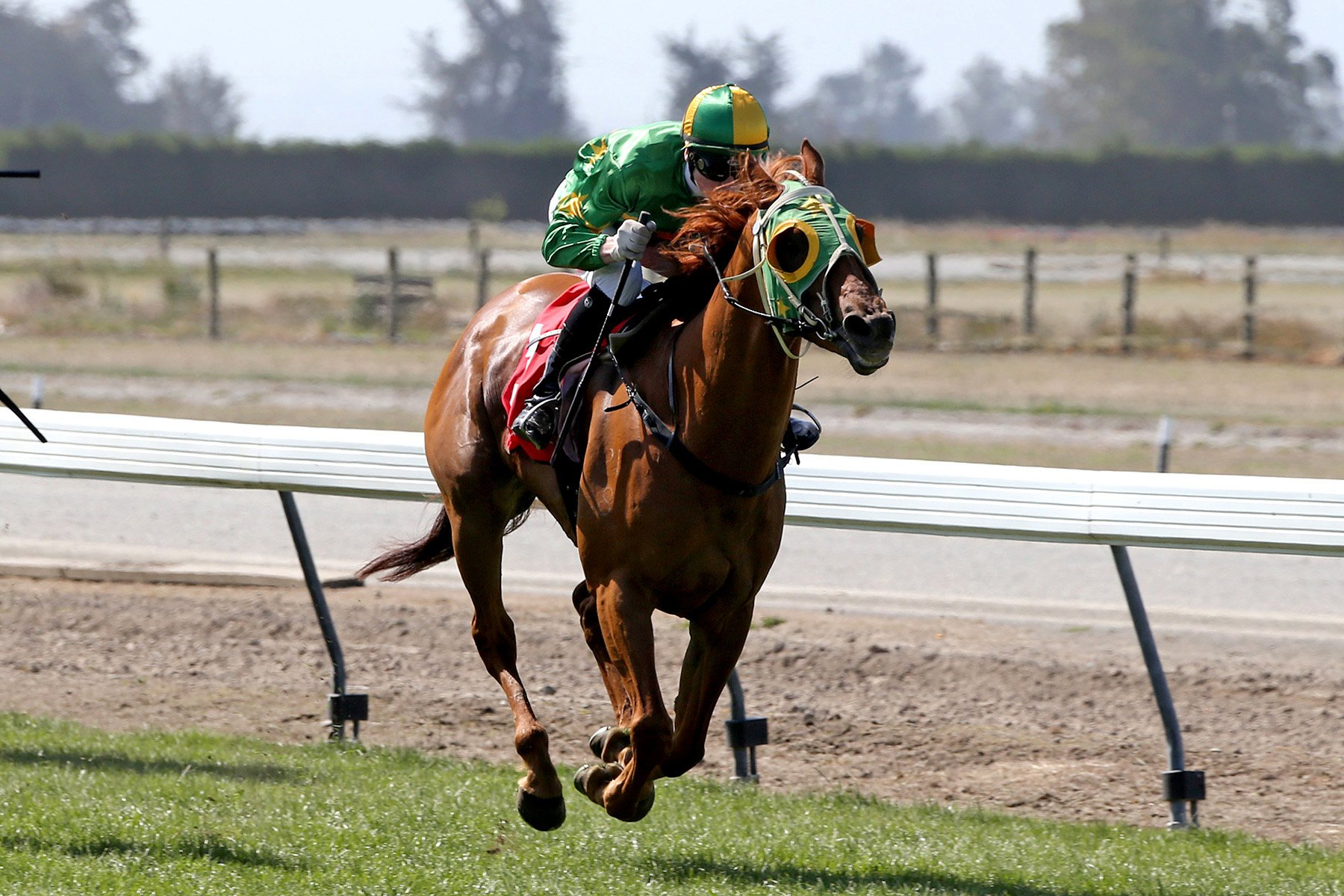 Wingatui-trained Tommy Tucker is the topweight in today's Timaru Cup. Photo from Race Images.