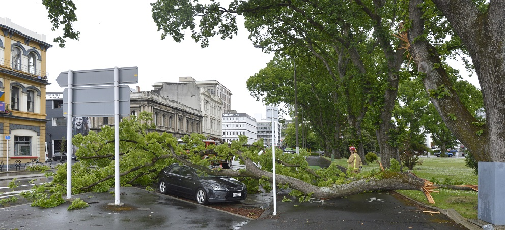 The bough lies over a car parked in Lower Rattray St at Queens Gardens. Photo: Gerard O'Brien