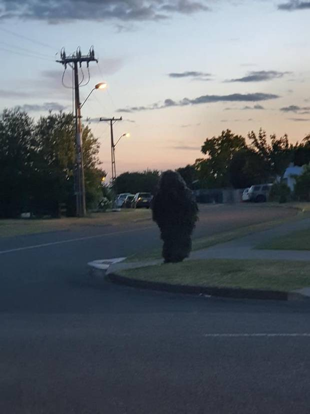 """Manaia Munro, who spotted the prankster, asked them to """"stop being an idiot"""". Photo: Supplied"""