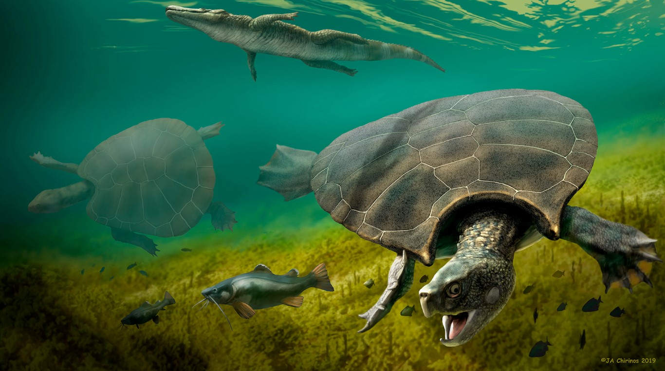 An artist's impression of Stupendemys geographicus, which lived in lakes and rivers in northern...