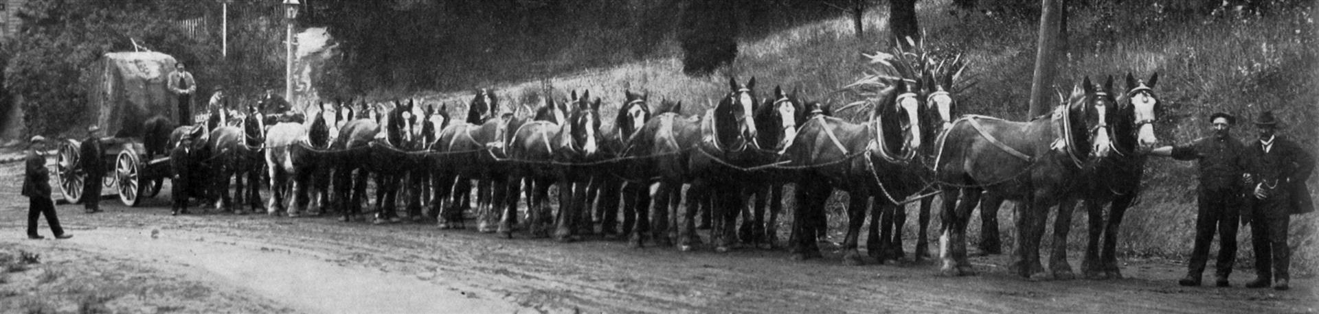 A 24 horse team from the New Zealand Express Company Ltd was used to deploy the 4 kilometre long...