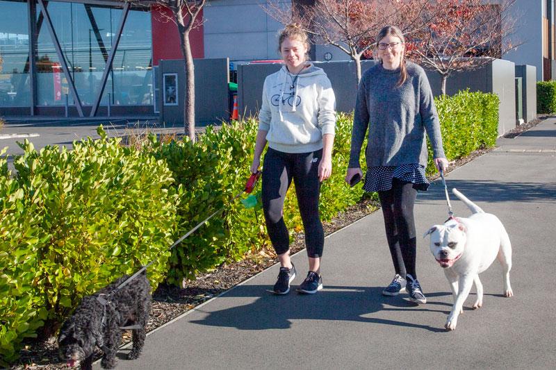 Walking the dogs on Skyhawk Rd, Wigram.