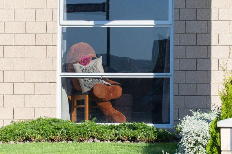 Teddy relaxing in the sun in Wigram.