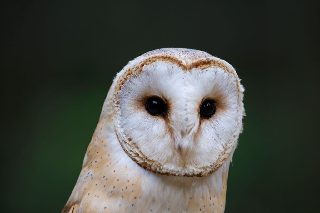 Owls are highly sensitive birds that can hear heartbeats so clients have to learn to control...