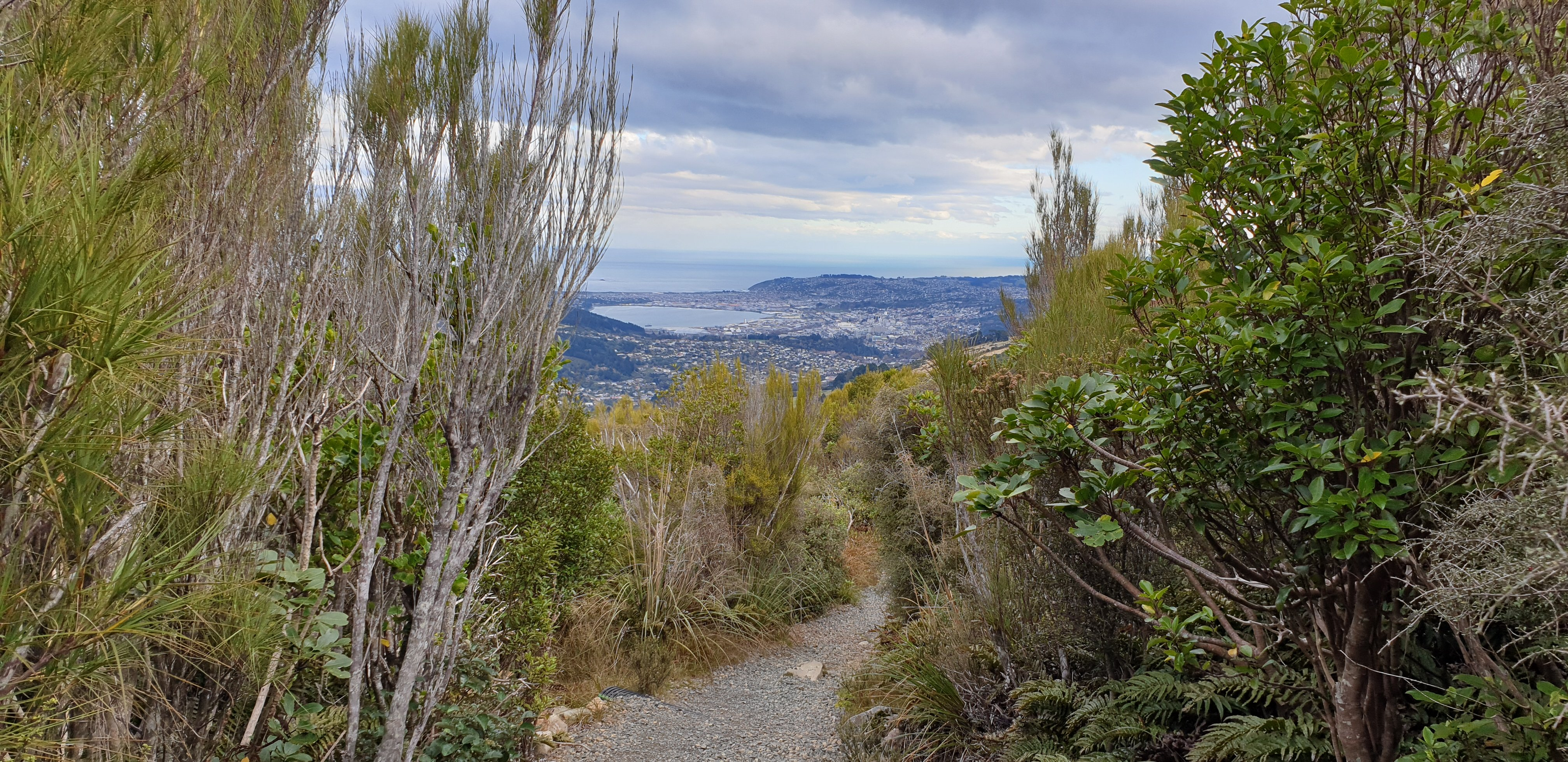 A view from the Mt Cargill loop. Photo: Clare Fraser