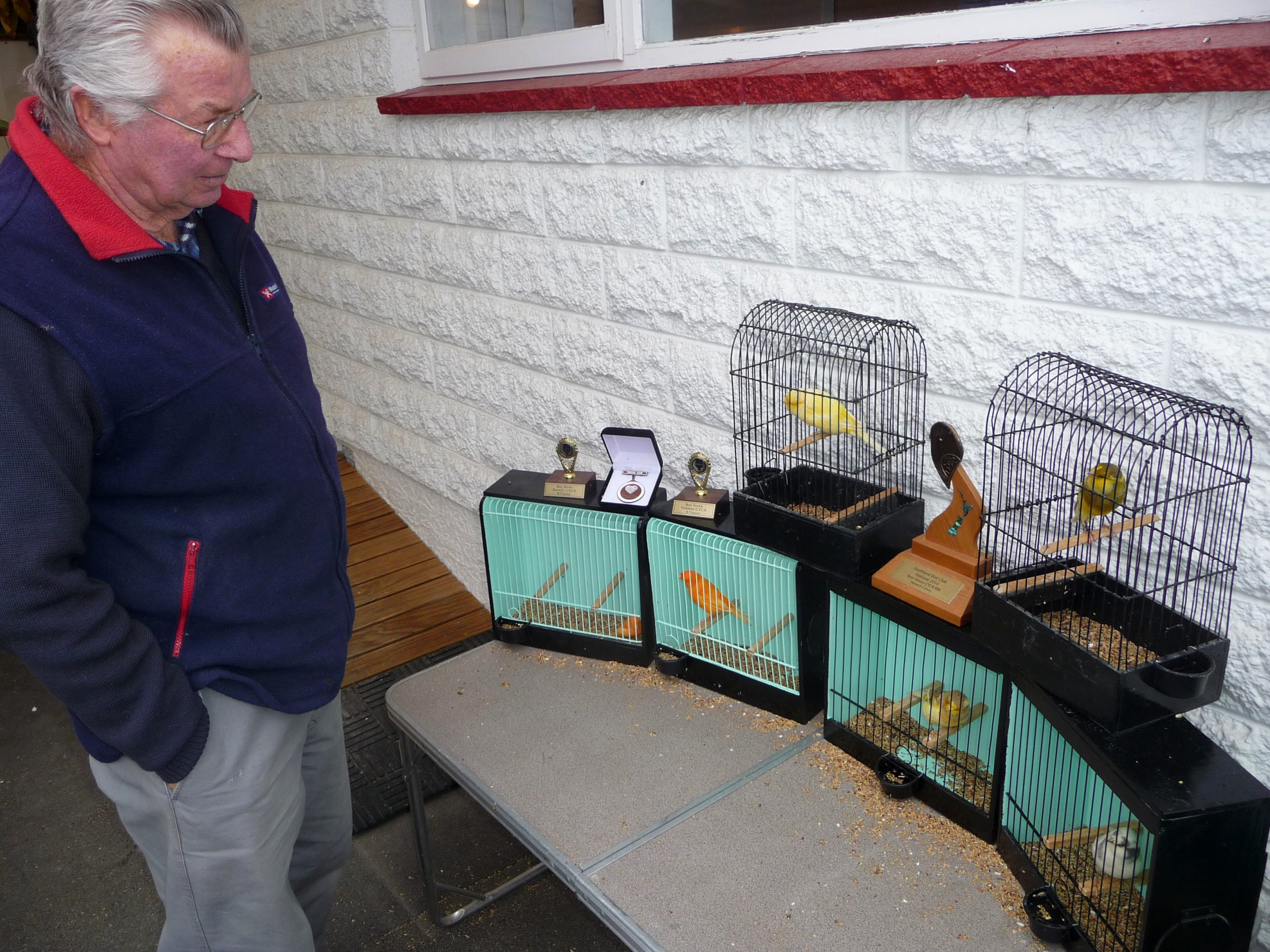 Ray Vincent casts a wise breeder's eye over some of his birds. Photo: Ashburton Courier