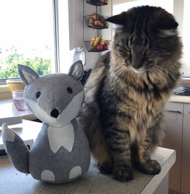 Neither the cat, nor fox shaped door stop have been winners during Toddler-Palooza 2020. Photo: NZH