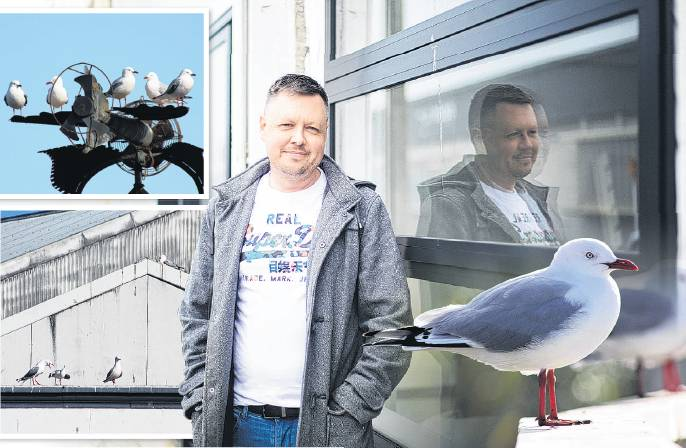 Streeter Concepts owner Lance Streeter says red-billed gulls are causing a stink in Oamaru's...