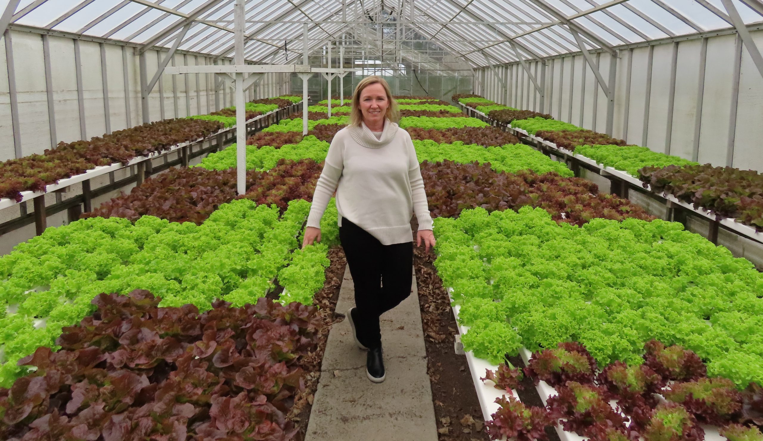 Georgie Wade with some of the gourmet lettuces being grown in their commercial glasshouses. Photo...