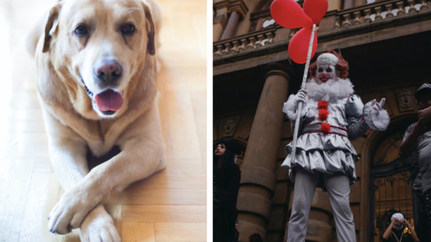 The latest optical illusion to go viral involves a dog and a very creepy clown. Photo: Pexels
