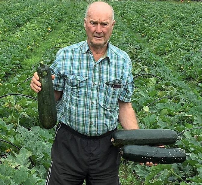 Courgette grower Brett Heap in a field where the vegetables were not picked. The courgettes have blown out to become unmarketable marrows. Photo / David Fisher