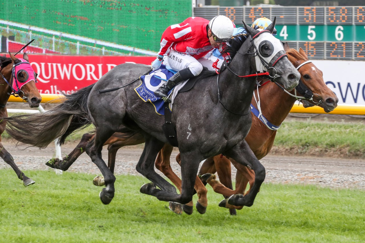 Ceddy Smith won his maiden race at the third attempt when he triumphed at Riccarton last Saturday...