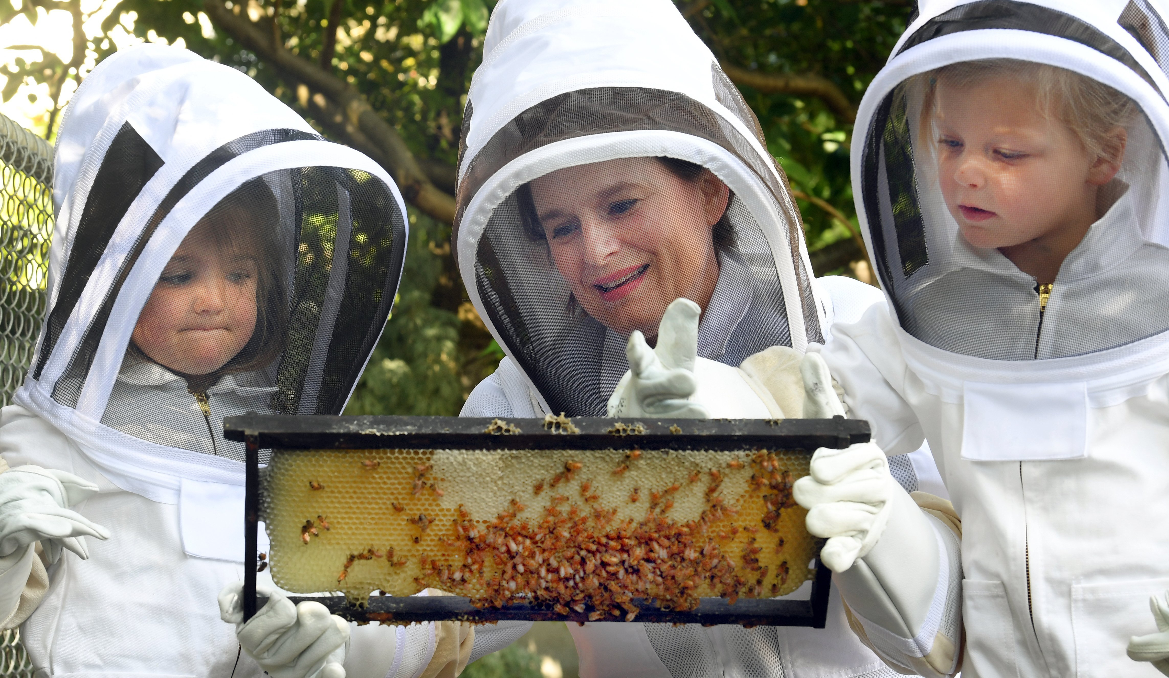 Bayfield Kindergarten teacher Rae Shurbutt examines a frame of honeycomb and its bees, closely...