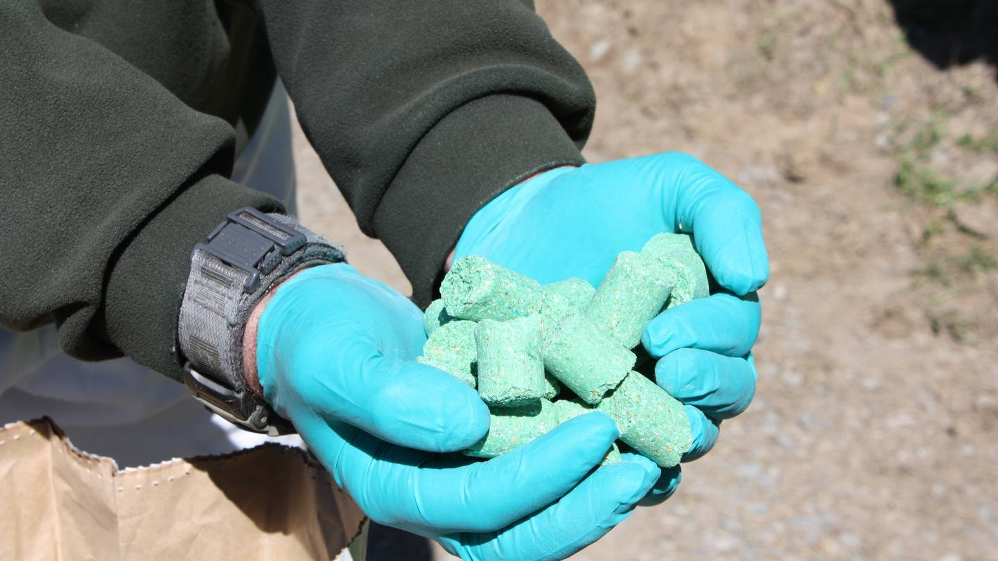 PCR manufactures a variety of pesticide baits, including the pellets containing 1080. Photo: File