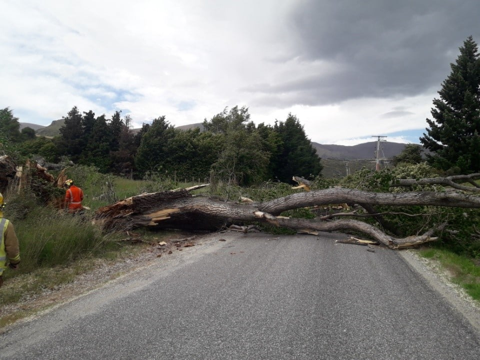 A large tree has fallen in Hogans Gully Rd this afternoon. Photo: QLDC