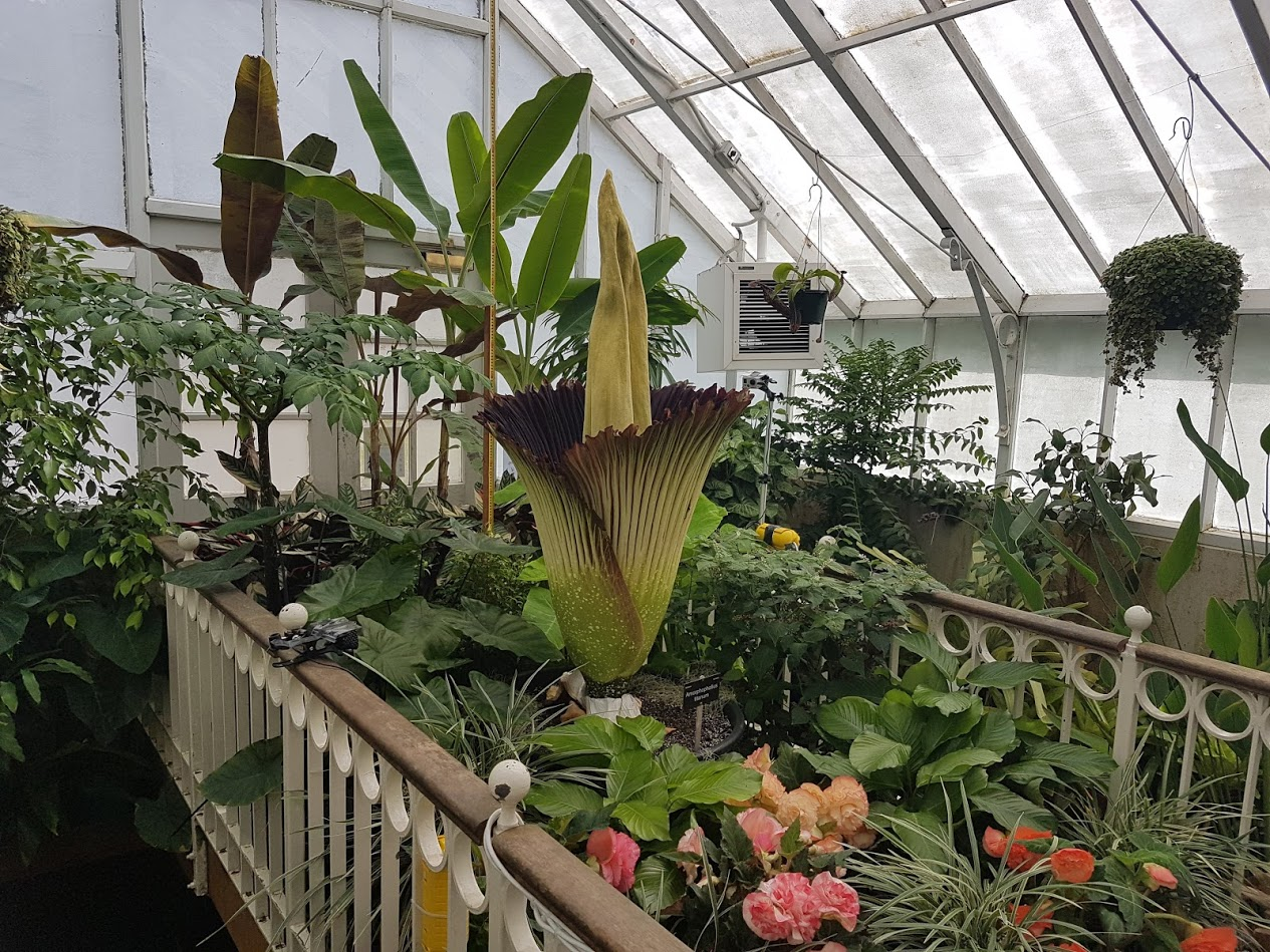 The plant was gifted to the Dunedin Botanic Garden in 2008 but only flowered for the first time a...