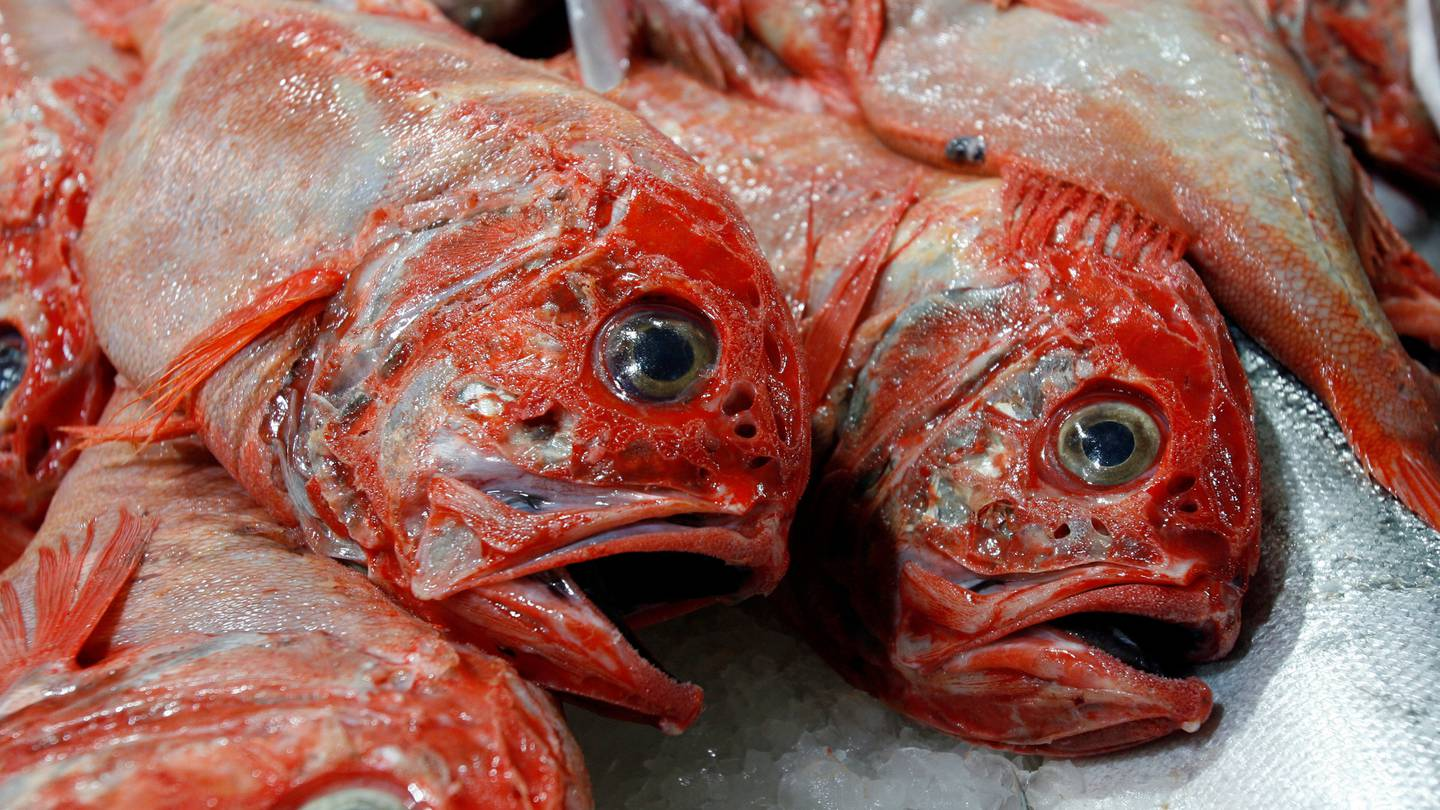 Sanford was targeting orange roughy in the in the Puysegur Benthic Protection Area. Photo: NZ...