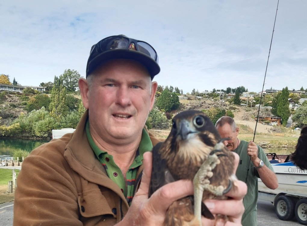 Derek Shaw with a native New Zealand falcon/karearea after it was was inadvertently added to the...