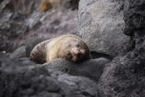 Brooke Kemp, 13 - Seal, Highly Commended, 11-15. Photo: Brooke Kemp